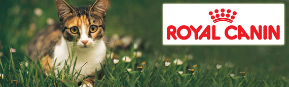 Royal Canin Cat Banner